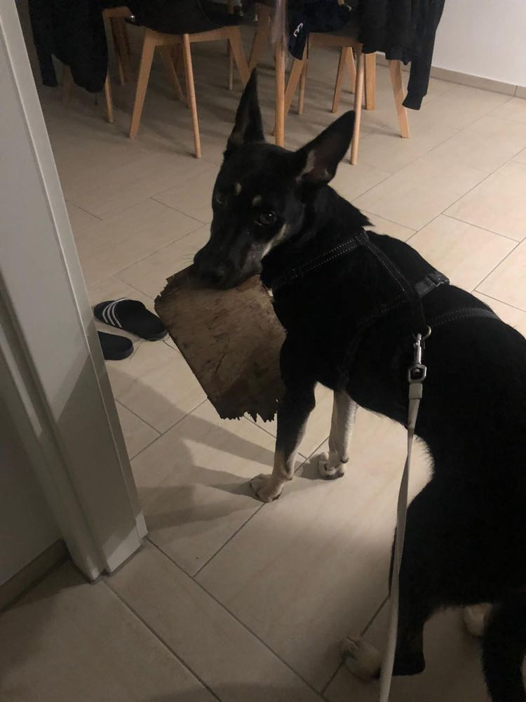 Betty ca. 50 cm (im Wachstum) – zur Pflege in 24582 Wattenbek