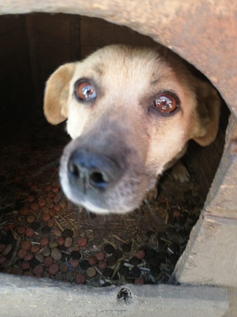 Louie ca. 40 cm – wünscht sich ein neues Leben