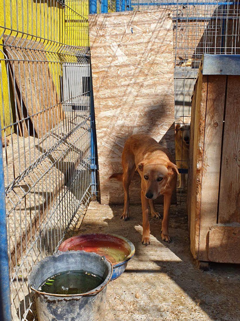 Kaline ca. 50 cm – hofft auf ein besseres Leben