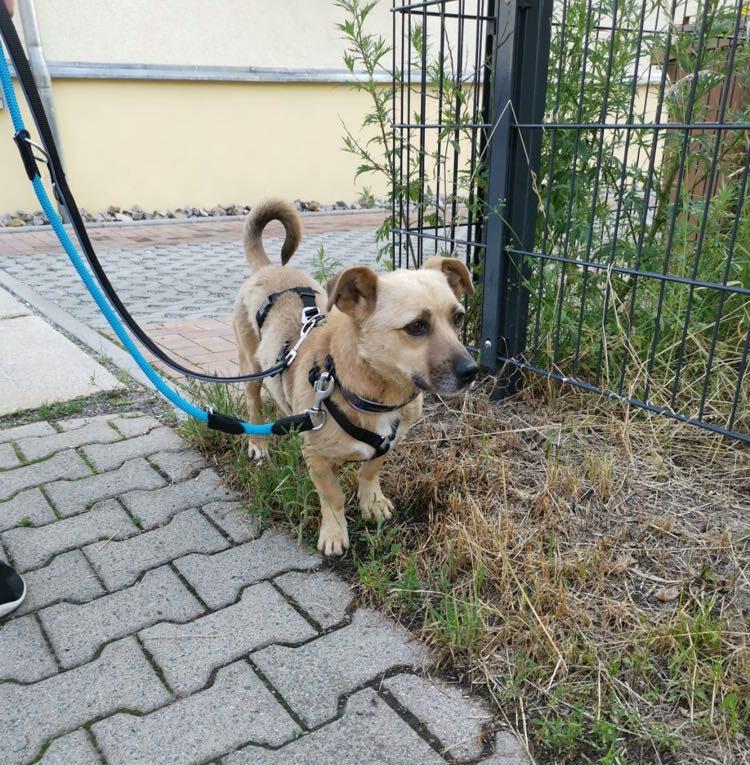 Louie ca. 40 cm – vermittelt