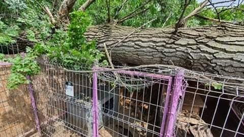 Baumschaden im Shelter