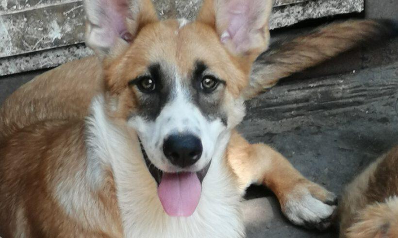 Unser Hund des Tages: Dina Z