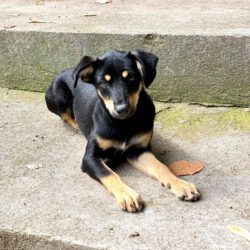 Unser Hund des Tages: Nala W