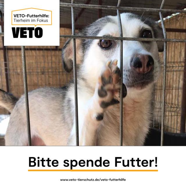 """Das Little Souls' Home ist das """" Tierheim im Fokus"""" bei VETO – Futterhilfe"""