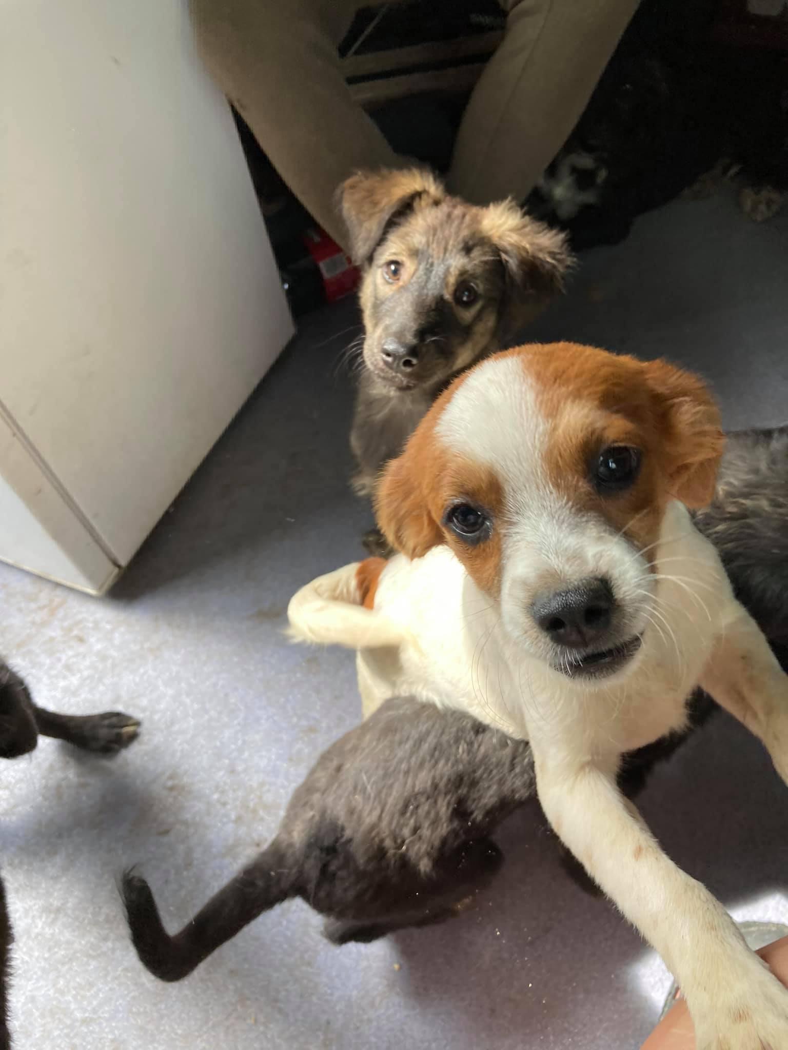 Max im Wachstum – wünscht sich eine Familie